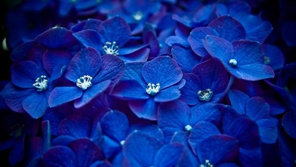 Энергия синего цвета