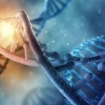 ДНК, Бахти
