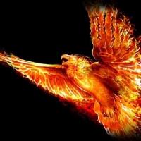 Феникс — птица солнца
